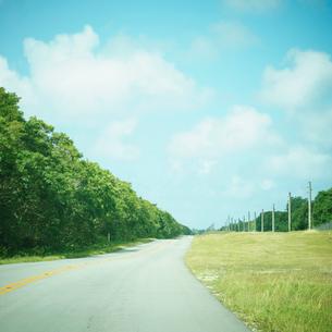 道と緑の木々と青空の写真素材 [FYI02052673]