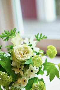 窓辺のグリーンの花の写真素材 [FYI02052687]