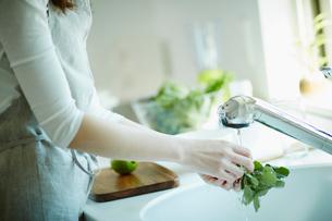 野菜を洗う女性の写真素材 [FYI02052866]