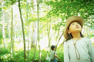 木々を見上げる女の子の写真素材 [FYI02053360]