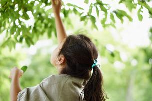ジャンプして葉を触る女の子の写真素材 [FYI02053571]