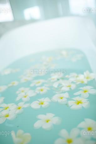 バスタブに浮かぶプルメリアの花の写真素材 [FYI02053720]