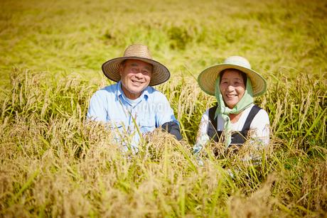 稲田と農家の夫婦の写真素材 [FYI02053750]
