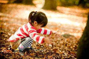 落ち葉で遊ぶ女の子の写真素材 [FYI02053880]