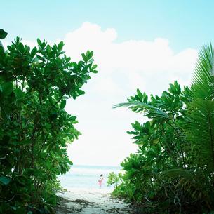 緑の木々と海の写真素材 [FYI02053938]
