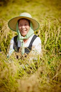 稲穂と笑顔の農婦の写真素材 [FYI02054161]