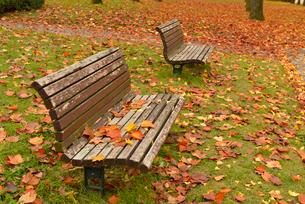落ち葉とベンチの写真素材 [FYI02054169]