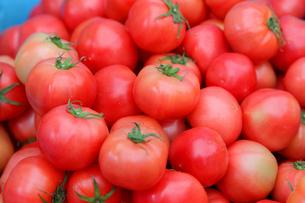 トマトの写真素材 [FYI02054223]