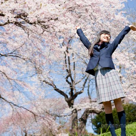 伸びをする女子中学生と桜の写真素材 [FYI02054313]