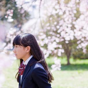 女子中学生の横顔と桜の写真素材 [FYI02054328]