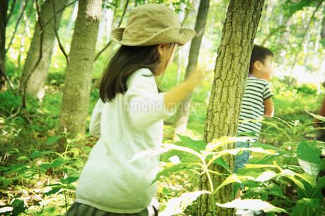 森林を歩く女の子と男の子の写真素材 [FYI02054688]