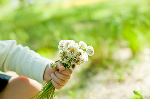 シロツメクサの花を持つ子供の手の写真素材 [FYI02054715]
