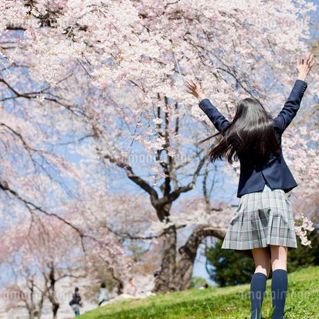 伸びをする女子中学生の後ろ姿と桜の写真素材 [FYI02054776]