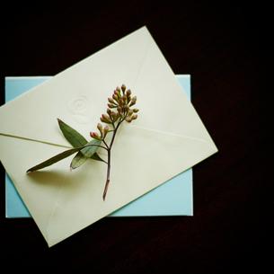 封筒と花の写真素材 [FYI02054844]