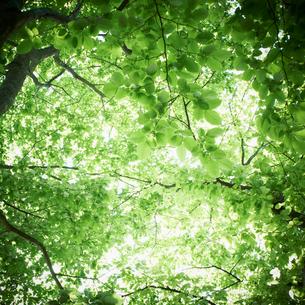 新緑の写真素材 [FYI02054881]