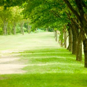 新緑の並木の写真素材 [FYI02055191]