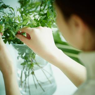 コデマリの花を活ける女性の写真素材 [FYI02055215]