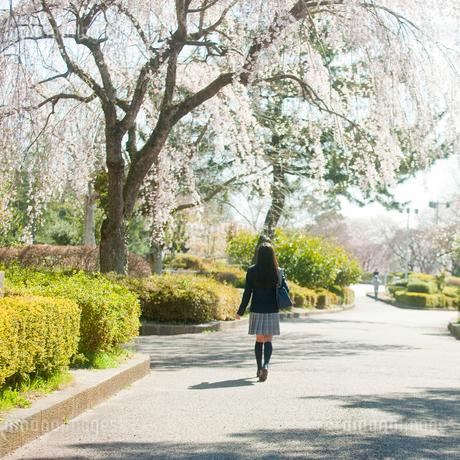 桜咲く公園を歩く女子中学生の後ろ姿の写真素材 [FYI02055549]