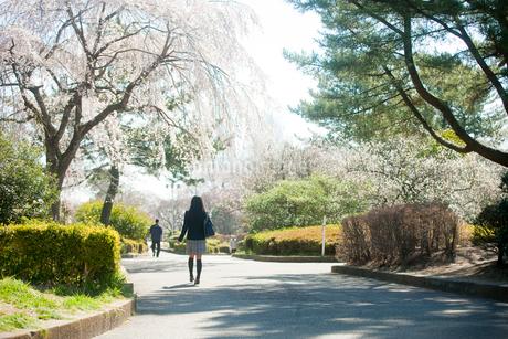 桜咲く公園を歩く女子中学生の後ろ姿の写真素材 [FYI02055687]