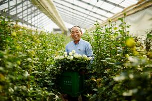温室でバラの花を持つ笑顔の農夫の写真素材 [FYI02055759]