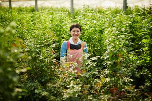 温室のバラの中に立つ笑顔の農婦の写真素材 [FYI02055768]
