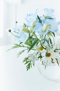 活けた花の写真素材 [FYI02055964]