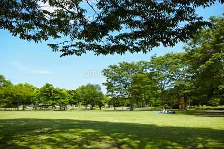 新緑の公園の写真素材 [FYI02056040]