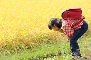 用水路を覗くランドセルを背負った女の子の写真素材 [FYI02056064]