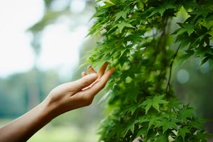 緑の枝に伸ばした女性の手の写真素材 [FYI02056084]