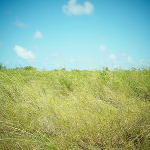 野原と青空の写真素材 [FYI02056088]