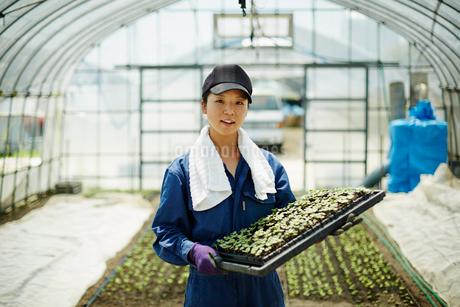 苗を持つ笑顔の農婦の写真素材 [FYI02056158]