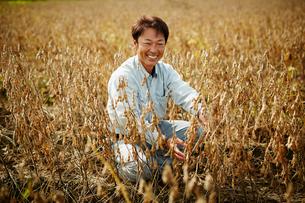 大豆畑の笑顔の農夫の写真素材 [FYI02056181]