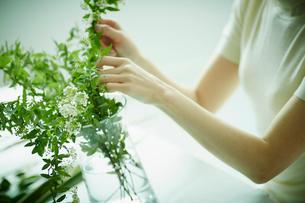 コデマリの花を活ける女性の写真素材 [FYI02056213]