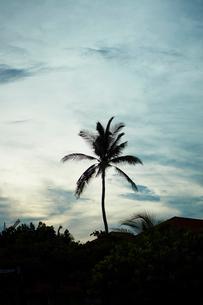 夕暮れの空とヤシの木の写真素材 [FYI02056253]