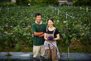 ナス畑に立つ農家夫婦の写真素材 [FYI02056256]