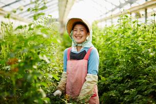 温室のバラの中に立つ笑顔の農婦の写真素材 [FYI02056258]