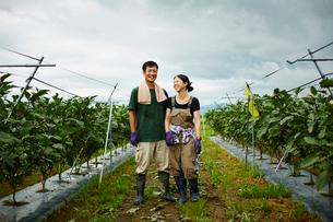 ナス畑に立つ農家夫婦の写真素材 [FYI02056288]
