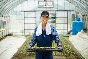 苗を持つ笑顔の農婦の写真素材 [FYI02056378]