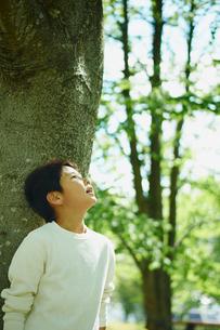 木の幹にもたれ見上げる男の子の横顔の写真素材 [FYI02056396]