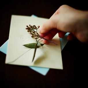 封筒に花を添える女性の手の写真素材 [FYI02056410]