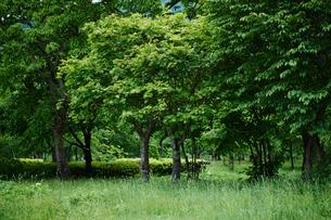 緑の木々の写真素材 [FYI02056443]