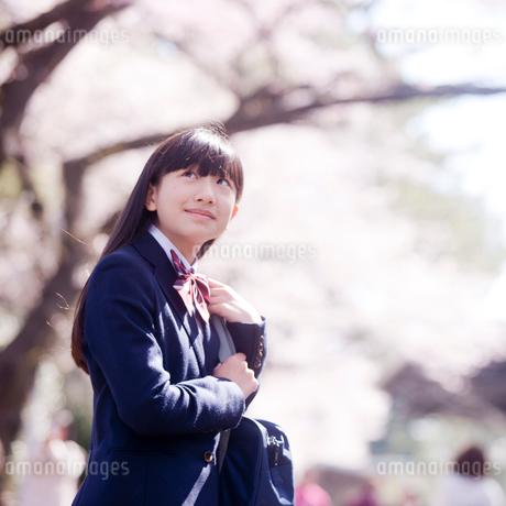 桜を見上げる女子中学生の写真素材 [FYI02056461]