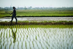 水田のあぜ道を歩く農夫の写真素材 [FYI02056701]