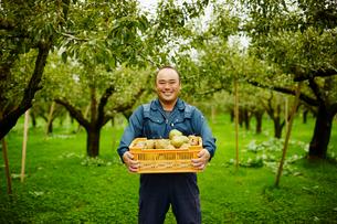 ラフランスが入った箱を持つ笑顔の農夫の写真素材 [FYI02056732]