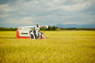 稲の収穫をする農夫の写真素材 [FYI02056742]