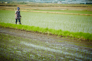 水田に立つ農婦の写真素材 [FYI02056747]