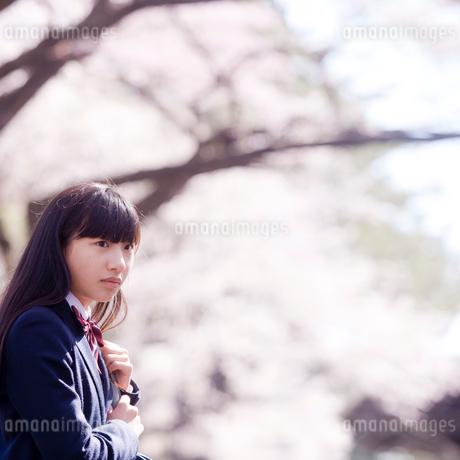 女子中学生と桜の写真素材 [FYI02056770]