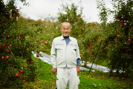リンゴ畑の笑顔の農夫の写真素材 [FYI02056808]