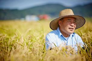 稲田と農夫の写真素材 [FYI02056879]
