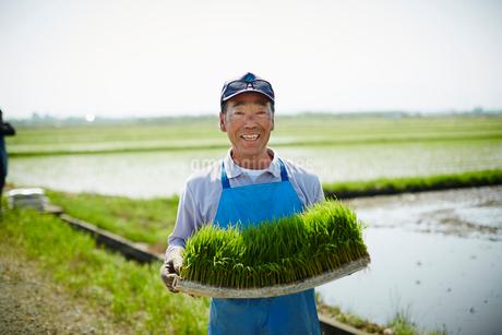 稲の苗を持つ笑顔の農夫の写真素材 [FYI02057015]
